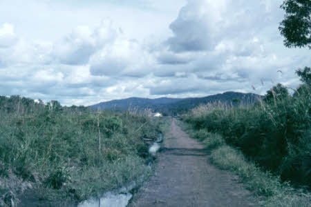 The Bario landscape